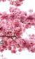 ◆皆様に今以上の春が来る!我々がお手伝いを致します!エキスパートにお任せ!
